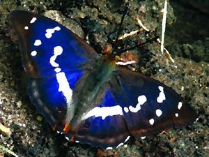 Motyl (Malowany Dzień Środowiska)