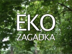 Eko Zagadka w Ratajskiej Telewizji Kablowej 2016 1
