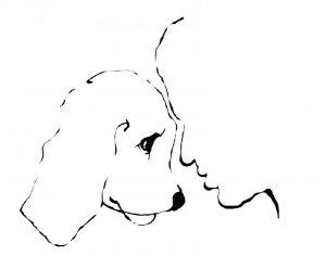 Młodzieżowa Konferencja Ekofilozoficzna Do serca przytul psa 2016