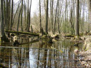 Wiosenny rajd po Parku Krajobrazowym Promno 2016 3