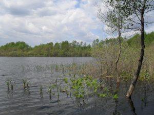 Jezioro Powidzkie Małe