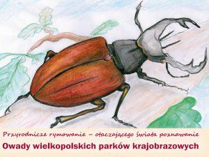 Przyrodnicze rymowanie owady 2016 okładka