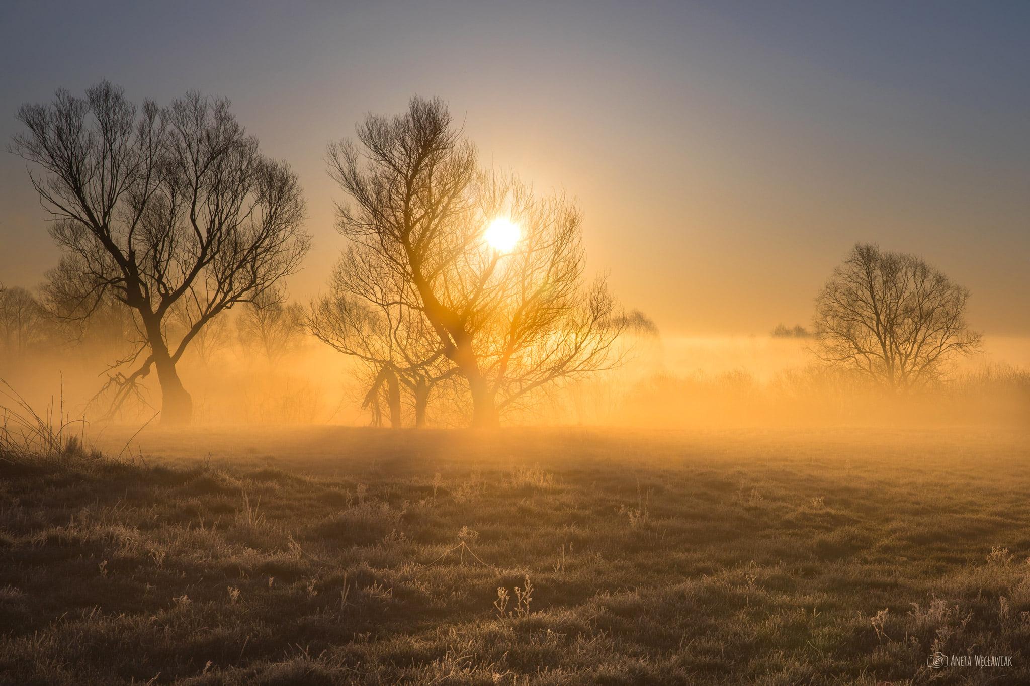 Poranek w Dolinie Warty