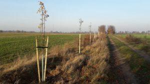 Park Krajobrazowy im. generała Dezyderego Chłapowskiego. W czterech różnych lokalizacjach pojawiło się 500 nowych drzew. Fot. M. Białek