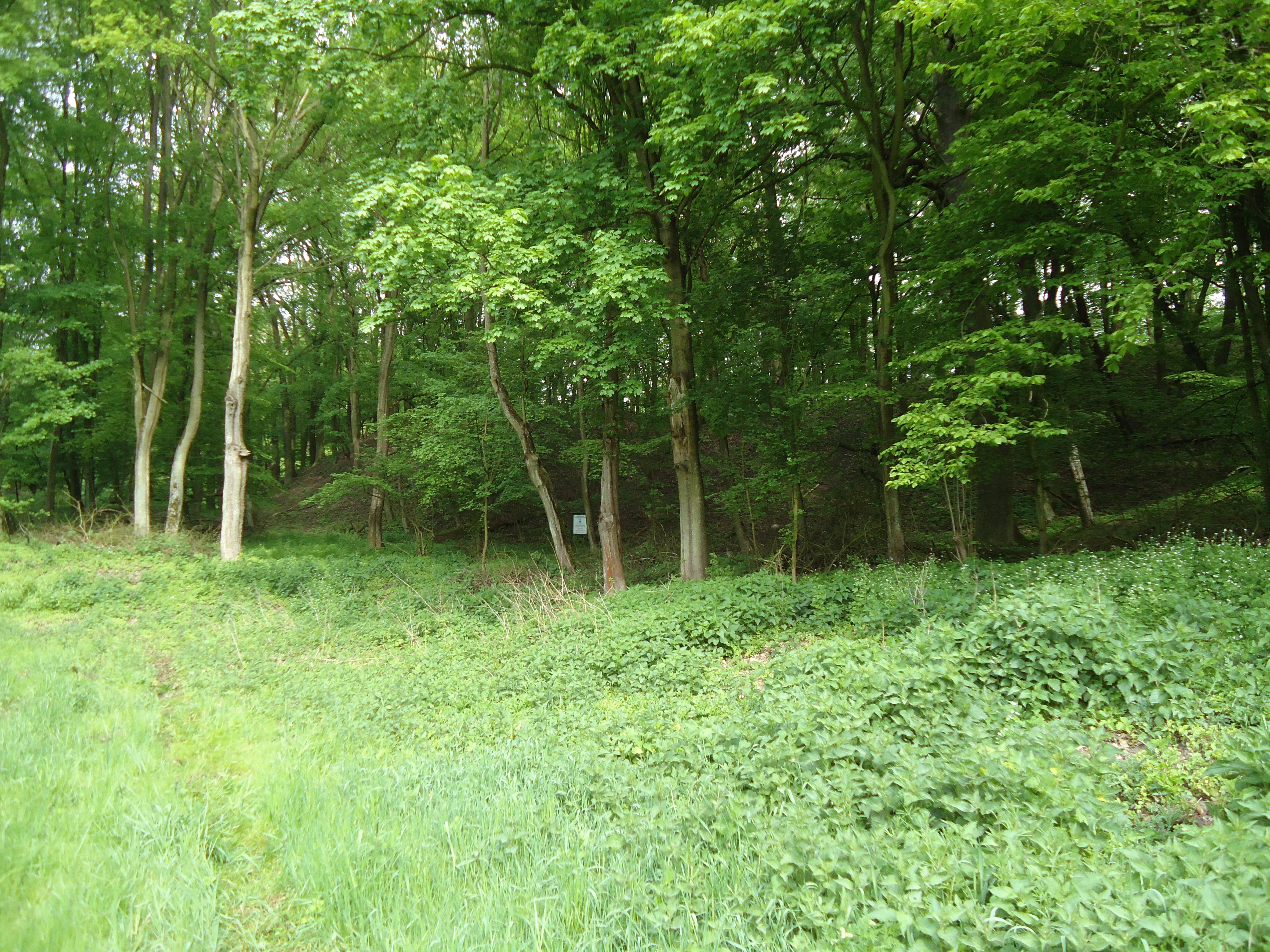 Widok na grodzisko z niższych partii lasu
