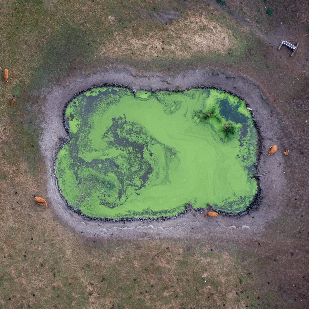 Zdjęcie przedstawia oczko wodne, w którym woda jest zielona. Woda wygląda jak wysychająca kałuża, przy której zbierają się krowy, aby się napić. Krowy są koloru brązowego, widać dorosłe zwierzęta i cielęta. Widoczne jest także poidło, w którym prawdopodobnie znajduje się świeża woda. Ziemia dookoła oczka wodnego wygląda jak na często uczęszczaną przez zwierzęta. Jest pozbawiona wysokiej roślinności, widać liczne ślady przebywających tam zwierząt.