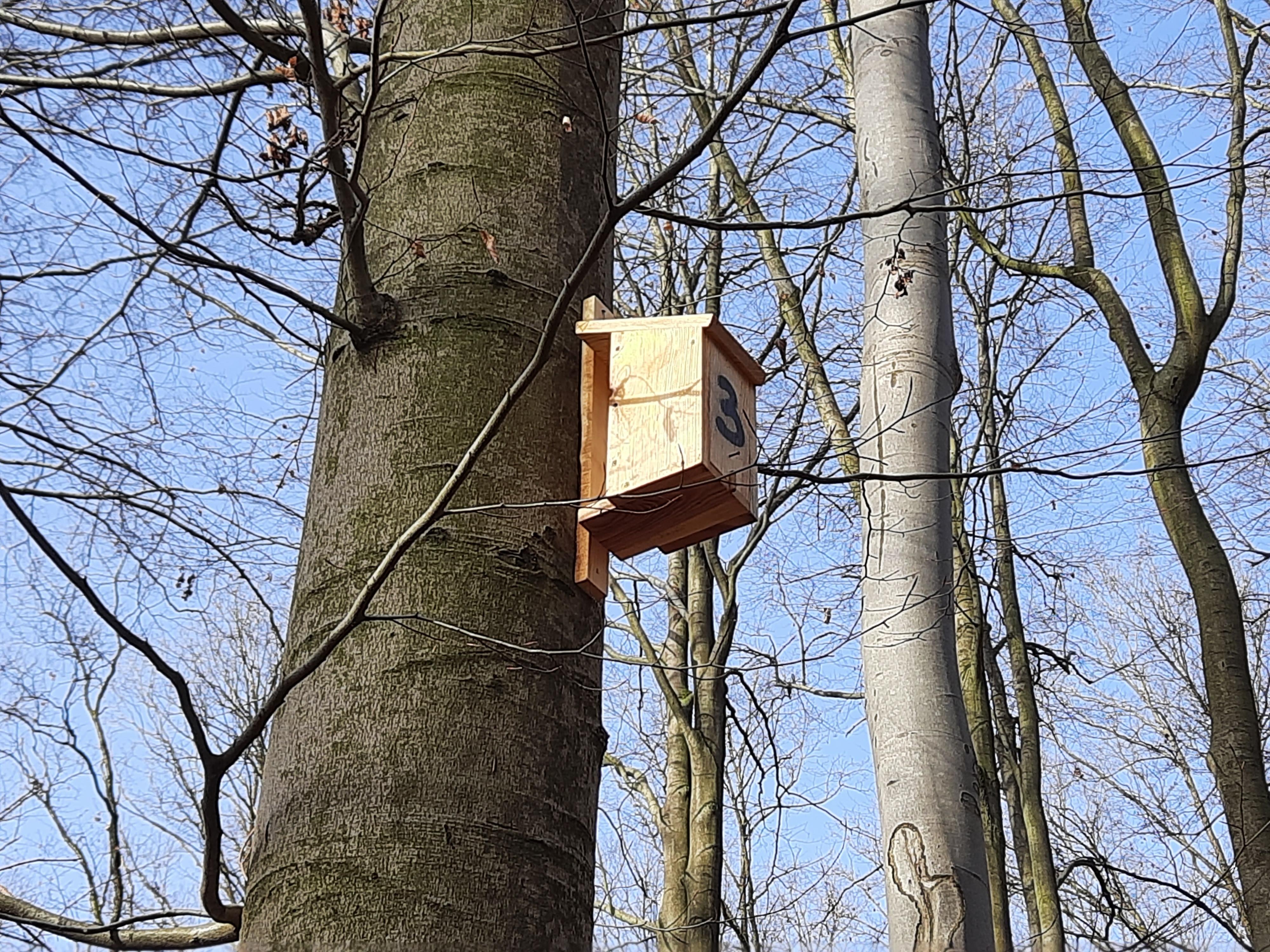 Zamontowana skrzynka na drzewie