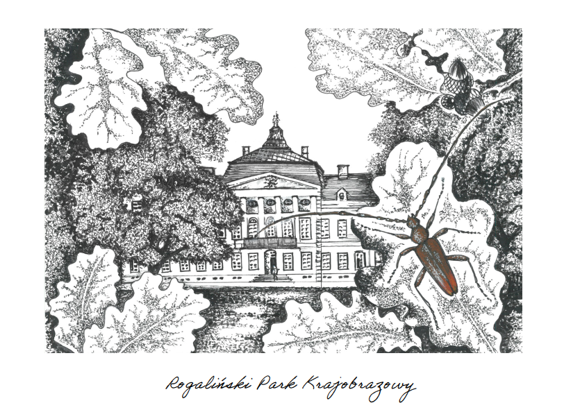 Pałac w Rogalinie, kozioróg debosz, liście debu